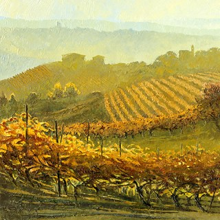 Piemonte - Rows of Vines at Montelupo Albese